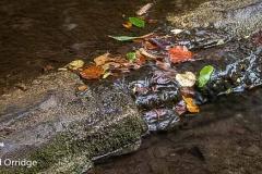 Monsal Weir September 2018 Chris James-1