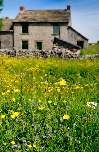 Wild flowers growing outside the Peak District field centre where Peak Digital Training runs photography courses for beginners and landscape photographers