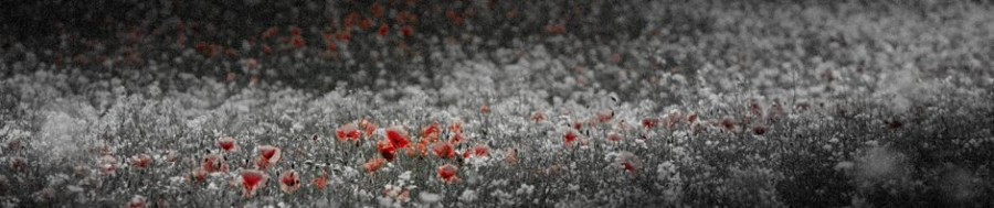 Coloured poppies in a black and white image edited in Adobe Photoshop © Chris James