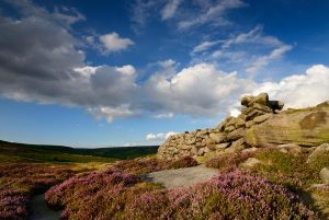 Heather moorland on the edge of Sheffield © Chris James