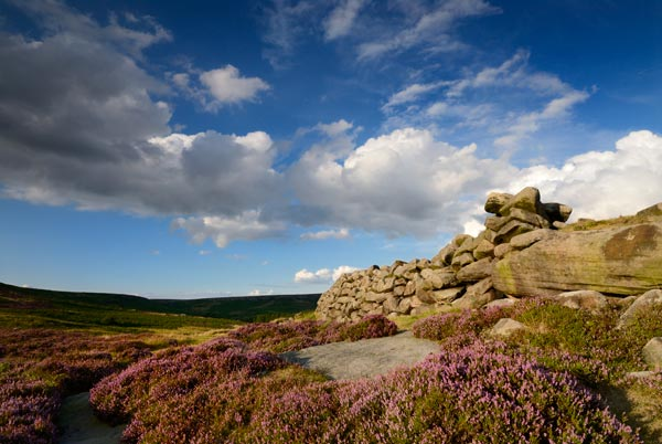 Heather in bloom in the Derbyshire Peak District near Sheffield, one of the subjects on beginners photography courses run by Peak Digital Training. Photo ©Chris James