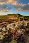Heather moorland near Sheffield. Photo © Chris James