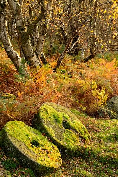 Abandoned millstones in the Peak District, where Peak Digital Training runs one day landscape photography courses