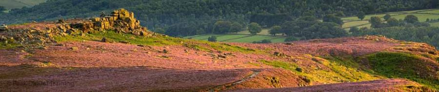 Peak District landscape photography course on heather moorland. Photo © Chris James