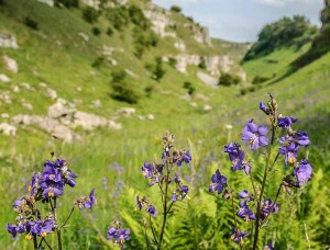 Lathkill Dale in the Peak District, where Peak Digital Training are running a landscape photography course. Photo © Chris James
