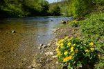 Lathkill Dale in spring © Chris James