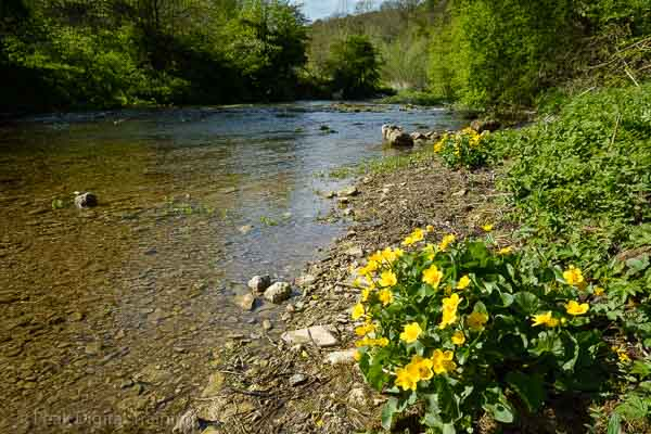 Beginners' photography course Peak District - Lathkill Dale in spring © Chris James