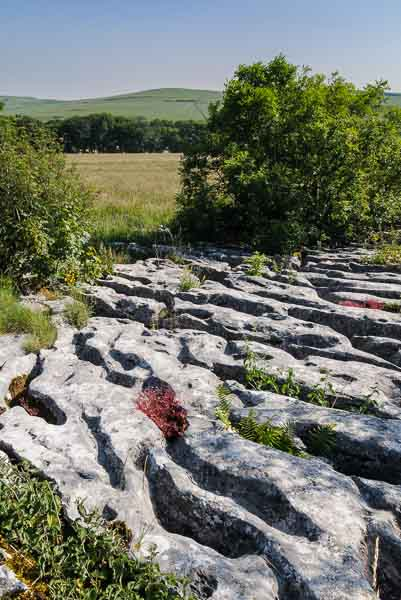Peak District photography locations - rare limestone pavement