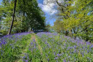 Bluebells on a Peak District landscape photography course by Peak Digital Training. Photo © Chris James