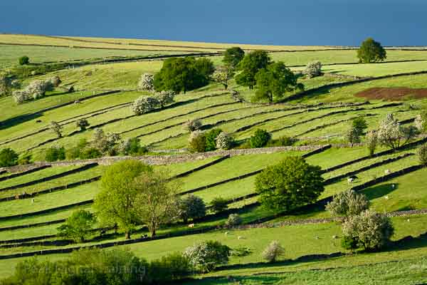 Fields and drystone walls in the Peak District. Photo © Chris James