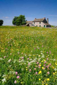 Wild flower meadow in the Peak District © Chris James