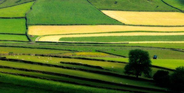 A photograph of field patterns in the Derbyshire White Peak, where Peak Digital Training runs landscape photography workshops