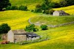 Flower meadows in the Peak District. Landscape photography courses by Peak Digital Training. Photo © Chris James