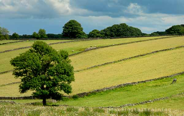Peak District field patterns. Photo © Chris James