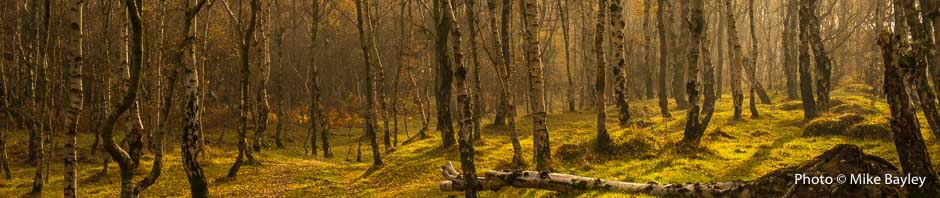 Autumn photography course in the Peak District. Photo © Mike Bailey
