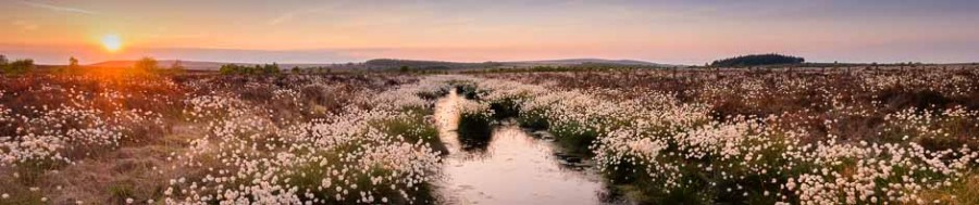 Cotton grass on Peak District moorland, where Peak Digital Training run beginners and landscape photography courses